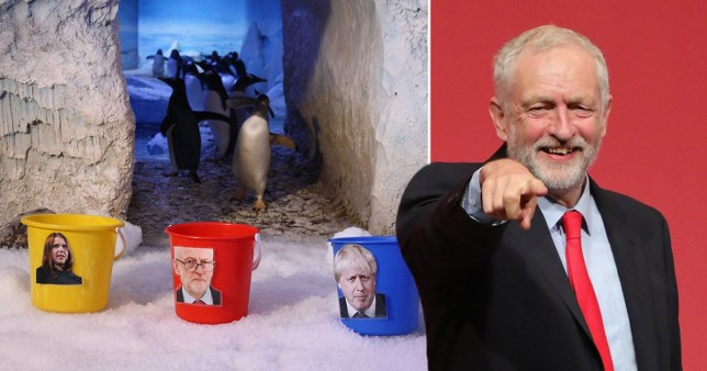 UK's first gender neutral penguin thinks Jeremy Corbyn will win the election