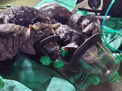 Kittens given oxygen masks after being rescued from kitchen fire