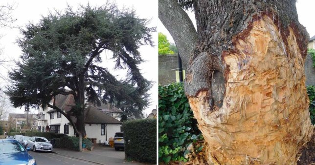 Man fined £60,000 for damaging tree in his own garden
