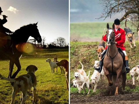 More than 200 Boxing Day hunts planned as campaigners push for tougher laws