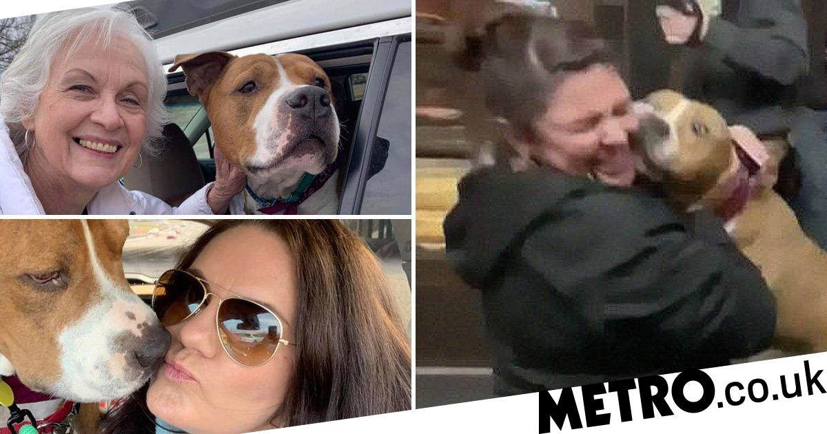 Stolen dog found 2,000 miles away from home returned by 15 strangers