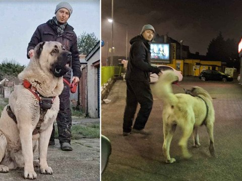 Vigilante and his dog make first citizen's arrest while patrolling neighbourhood