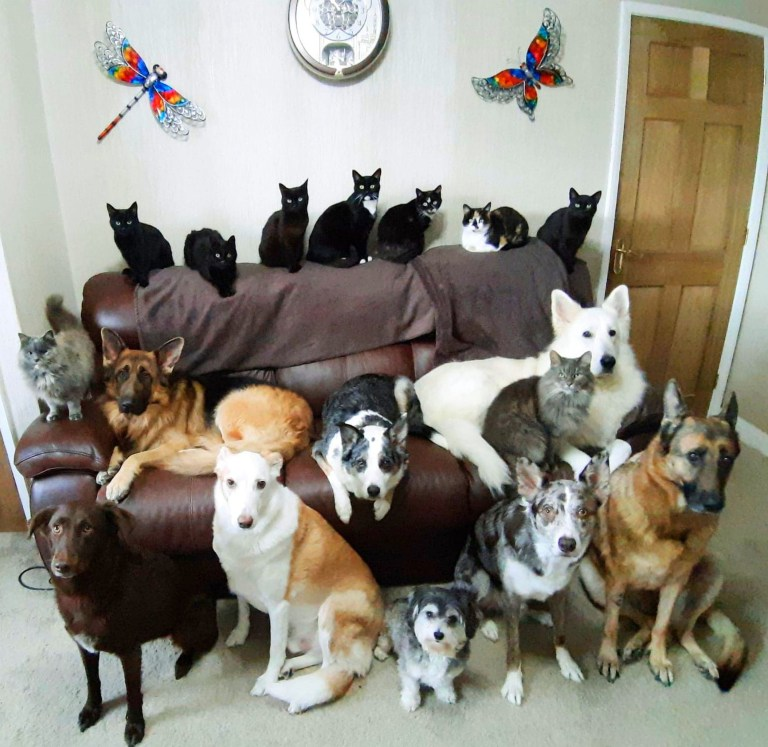 PIC FROM Kennedy News and Media (PICTURED [from back left - front right]: KATHY'S PETS DINKY, JAKIE, OPAL, PADDY, SOCKS, SAFI, CINDERS, DUSTY, MAX, SHEBA, SMOKEY, STORM, RUBY, BEN, TEDDY, RIO, MISHKA) A pet owner managed to get her SEVENTEEN cats and dogs to pose perfectly still for the ultimate 'family pawtrait' - after spending days trying to get the perfect shot. The amazing photo shows eight solemn-faced pooches and nine felines lined up on and around the sofa, all gazing stoically into the camera. Dedicated Kathy Smith managed to set up and capture the heart-warming snap in five minutes two weeks ago after bribing them with a stash of treats. SEE KENNEDY NEWS COPY - 0161 697 4266