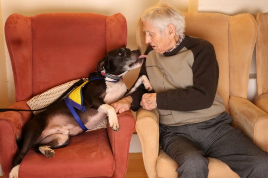 LONDON, DECEMBER 3RD 2019. THERAPY DOG Dodger, the Staffordshire Bull Terrier mix therapy dog, is pictured interacting with Robert Thompson, resident of the George Mason Lodge care home in Leytonstone, London, December 3rd, 2019. The visit, part of the Pets as Therapy initiative scheme, aims to use dogs to help enhance residents wellbeing by calming and soothing them and preventing them from feeling isolated. Photo credit: Susannah Ireland