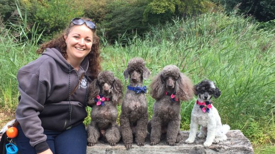 DOG GROOMER LOIS PECKOVER, 34, OF WICKFORD, ESSEX, WITH HER [L-R] MINIATURE POODLES FRECNHY, 10, DOODY, 10, AND RIZZO, 13, AND HER TOY POODLE MEESHA, SEVEN) A pet groomer staged a Nativity scene with a twist to spread Christmas cheer - using eight DOGS to play Jesus, Mary and the other characters. Lois Peckover, of Wickford, Essex, and her pal Claire Koehl, 36, donned their pups in towels, doggy costumes and DIY crowns to recreate the biblical scene. The six poodles, one springer spaniel and one cockapoo posed patiently for the camera as baby Jesus, Mary, Joseph, the angel Gabriel and wise men. DISCLAIMER: While Kennedy News and Media uses its best endeavours to establish the copyright and authenticity of all pictures supplied, it accepts no liability for any damage, loss or legal action caused by the use of images supplied and the publication of images is solely at your discretion. SEE KENNEDY NEWS COPY - 0161 697 4266