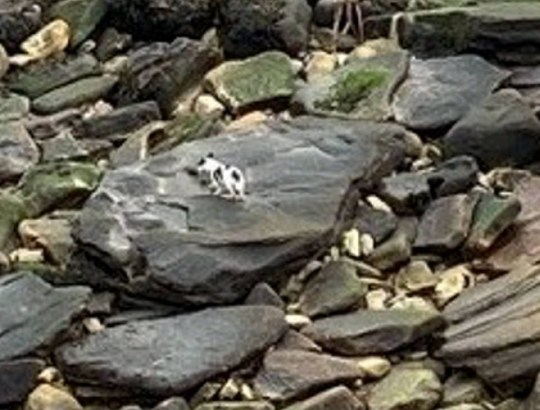 Dated: 10/12/19 George the Jack Russell dog who miraculously survived plunging 40ft off a cliff on the Northumberland coast. Pictured is George at the bottom of the cliff. See North News story