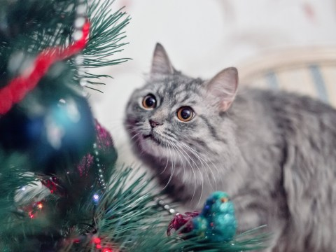 How to make your Christmas tree safe for cats