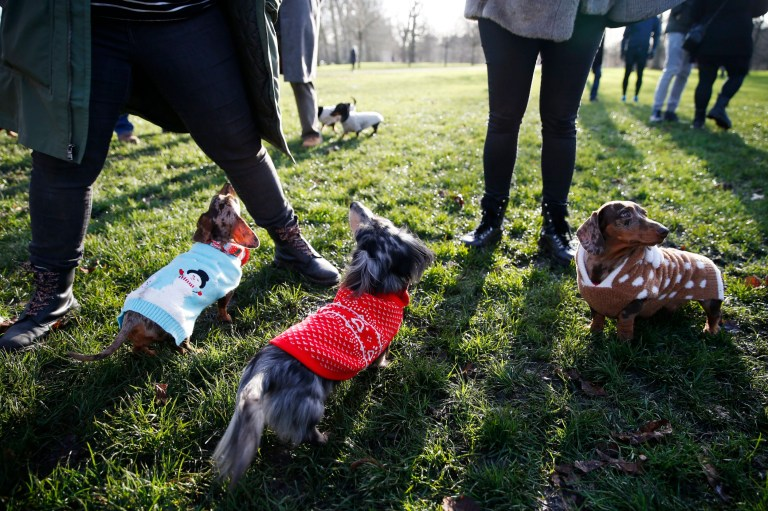 Dogs taking part in a sausage dog festive walk in Hyde Park, London. PA Photo. Picture date: Sunday December 15, 2019. Photo credit should read: Hollie Adams/PA Wire