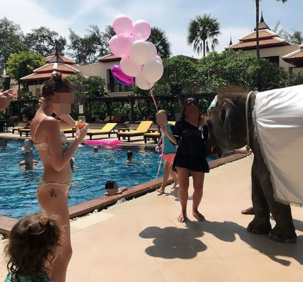 Baby elephant forced to entertain guests poolside at 5 star hotel
