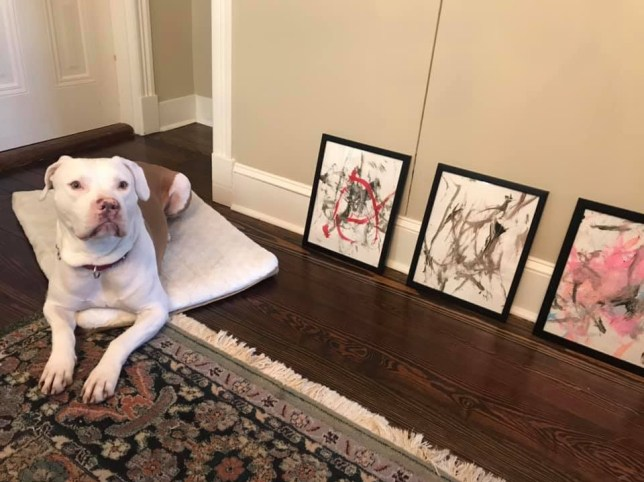 'Ricasso' the dog who has earned $4,000 with paintings he made with a few wags of his tail