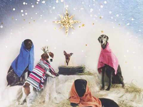 Kennel worker uses post-it notes covered in peanut butter to get dogs to pose for nativity scene