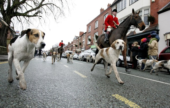 The Cheshire Hunt parade down High Street in Tarporley, Cheshire, after their annual hunt was called of due to snow and ice.