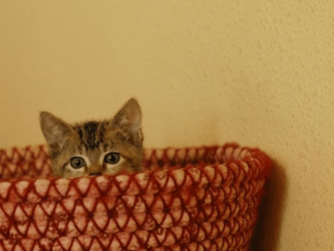 Cats have facial expressions and some sensitive people can interpret them