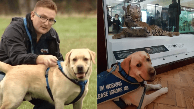 Pictures of Richard Mearns with PTSD support dog Ziggy - provided by charity Veterans with Dogs