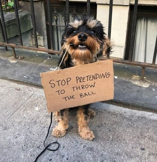 Dog holding sign saying stop pretending to throw the ball