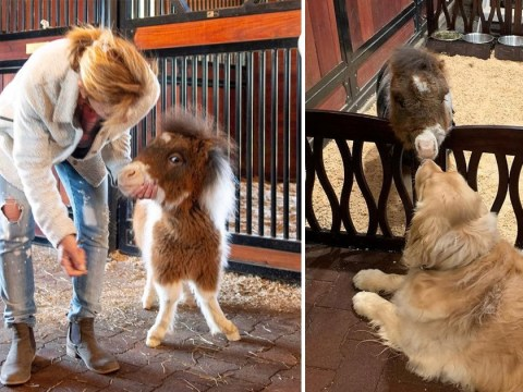 Martha the horse is 2ft tall – the same size size as a golden retriever