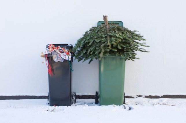 A Christmas tree in a bin