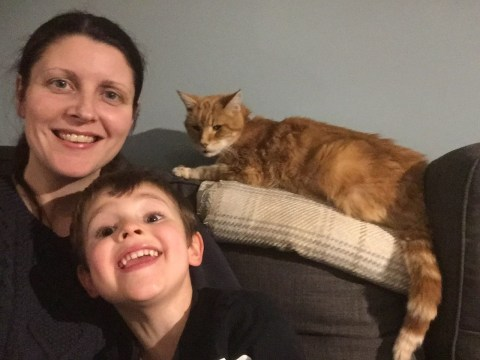 Family brings missing cat home on New Year's Eve two years after he disappeared