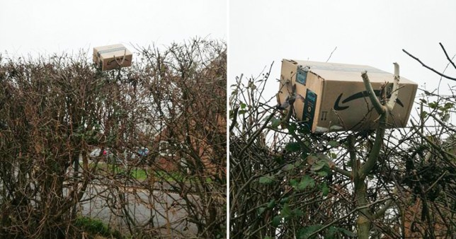 Amazon parcel left on top of massive hedge