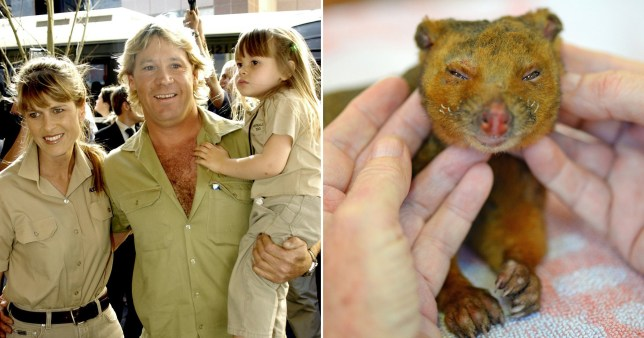 Terri Irwin, wife of Steve Irwin, shared a heartbreaking photo of a burned possum
