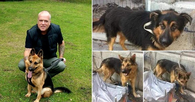 Dad Paul Viner with his rescue dogs