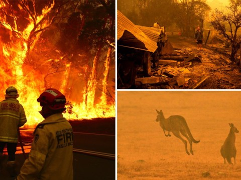 What you can do to help people and animals in the Australian bushfires