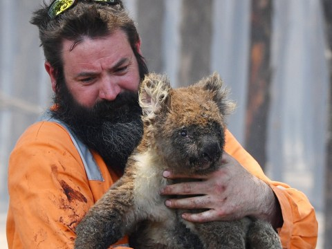 More than 1,000,000,000 animals have now died in Australia's wildfires