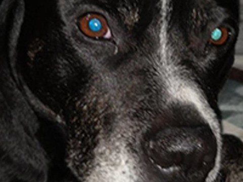 Dog shook so violently with fear at New Year fireworks she is now paralysed