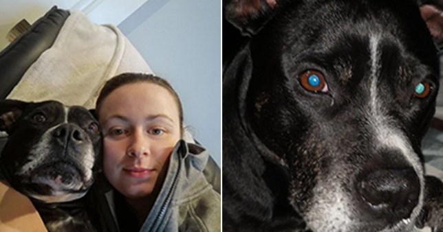 Melissa Sinclair is calling for a ban on the publuc sale of fireworks after her dog lost the feeling in her legs due to violent shakes (Picture: Melissa Sinclair)