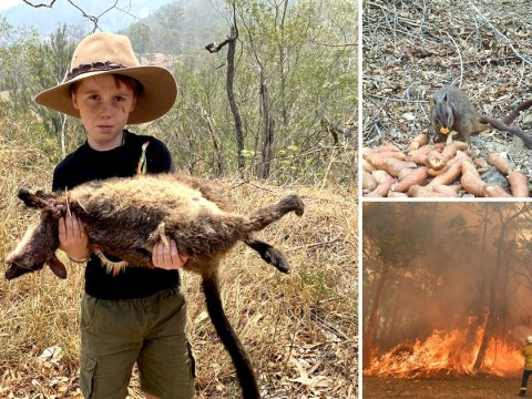'They're all dying, aren't they dad?' asks boy, 7, as wildfire crisis escalates