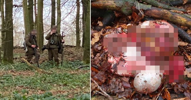 Dog walker watches cullers 'hack deer apart' on National Trust estate