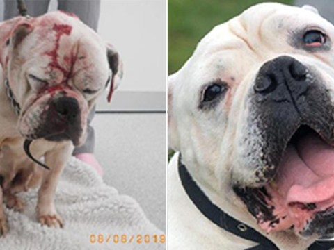 Dog doused in bleach, beaten over the head and then dumped in bath