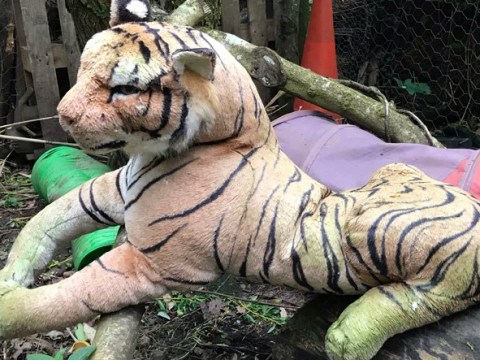 Weirdest RSPCA calls include 'caged tiger' that turned out to be a toy