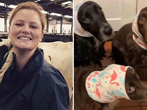 Vet reported to police for animal cruelty after dressing dogs in snoods