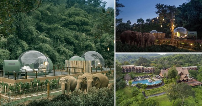 Sleep under the stars next to elephants in bubble pods in Thailand