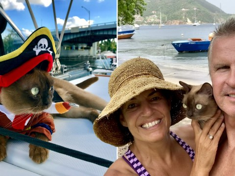 Adventurous cat Miss Rigby has been sailing the waters of the Caribbean since she was a kitten