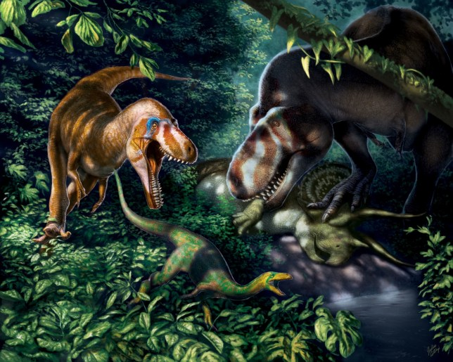 An illustration of juvenile Tyrannosaurus rex with knife-like teeth, dominating the mid-carnivore niche before growing up to become the giant, bone-crushing King of Dinosaurs. (Credits: PA)