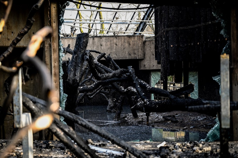 epa08097649 A general view of the completely burned out ape house of the zoo in Krefeld, Germany, 01 January 2020. All animals, in total more than 30, died during the fire at the Krefeld Zoo in the New Year's night. The dead animals include chimpanzees, orangutans and two older gorillas. The criminal police in Krefeld currently assume that so-called sky lanterns may have set the monkey house on fire on New Year's Eve. According to reports, eye-witnesses had seen sky lanterns land on the roof of the building. EPA/SASCHA STEINBACH