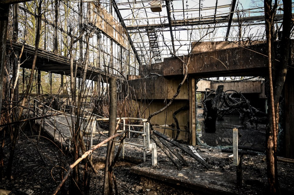 epa08097658 A general view of the completely burned out ape house of the zoo in Krefeld, Germany, 01 January 2020. All animals, in total more than 30, died during the fire at the Krefeld Zoo in the New Year's night. The dead animals include chimpanzees, orangutans and two older gorillas. The criminal police in Krefeld currently assume that so-called sky lanterns may have set the monkey house on fire on New Year's Eve. According to reports, eye-witnesses had seen sky lanterns land on the roof of the building. EPA/SASCHA STEINBACH
