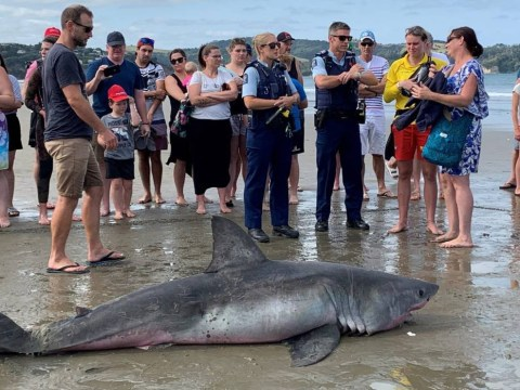 Great White shark 'kicked to death by group so they could take selfies'