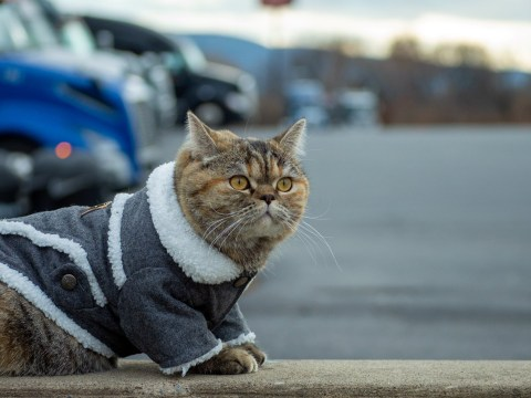 Tora the explorer cat has visited nearly all the American states in a truck