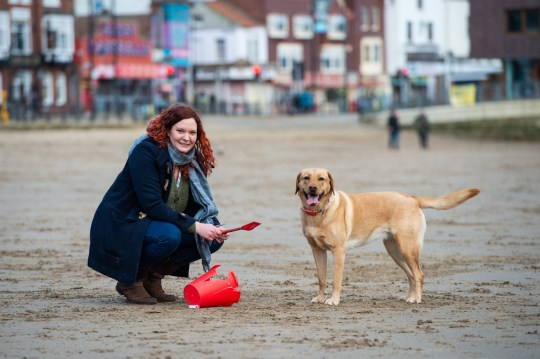 Molly the 2yo Labrador picks up litter on Scarborough beach, North Yorks., with owner Fliss Cater, 35. See SWNS story SWLElitter; A dogged effort to clean a beach of its rubbish has seen 250,000 items removed off the seafront - by a litter-picking LABRADOR. Determined pooch Molly and her owner Fliss Cater have been picking up over 100 pieces of litter from Scarborough beachfront for the past two years. As a pup, Molly was speed off and pick up as much rubbish as she could but, since then, Fliss has trained her to find specific items so she avoids picking up anything dangerous. Fliss, 35, said: ???I taught her different commands to keep her safe, because there???ll be things on the beach that could harm her. ???There are needles and sharp objects or just things you wouldn???t expect, so I wouldn???t let her go and pick anything up on her own.""