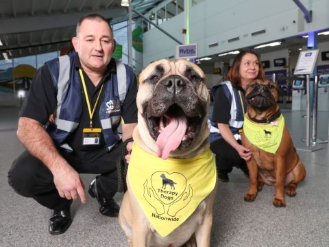 Therapy dogs stationed at UK airport to help nervous flyers
