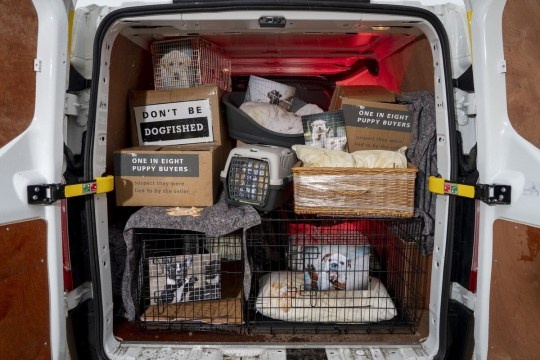 DogsTrust say thousands of pet owners are duped into buying animals that have been imported illegally and are held in tiny cages Picture: DogsTrust)