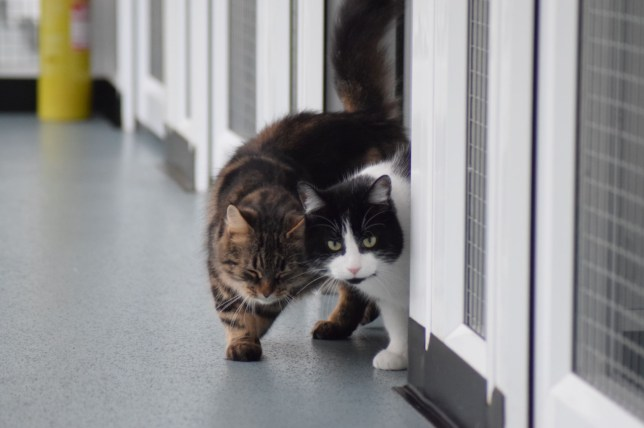 Single Mum Kitty And Cat With Heart Condition Find Love At Shelter Metro News
