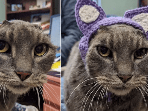 Cat gets snazzy pair of crocheted ears after hers were removed due to illness