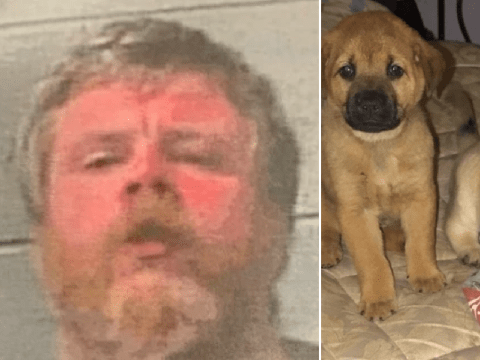 Man killed and skinned neighbors' four dogs 'because he wanted a doggy skin coat'