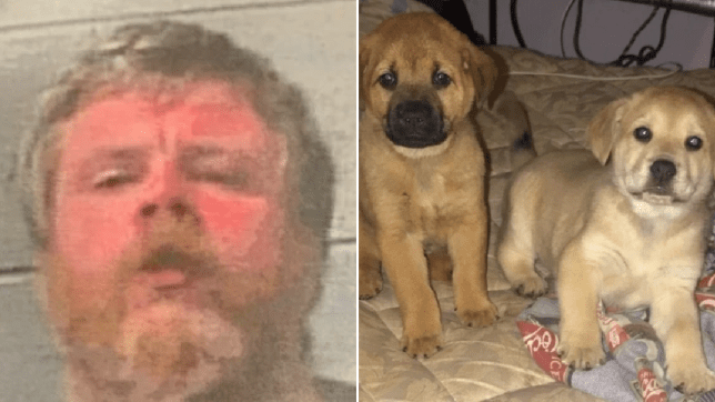 Mugshot of Jonathan Watkins next to file photo of puppies he killed