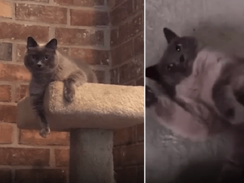 Vet killed healthy pet cat by giving her euthanasia shot instead of rabies vaccine