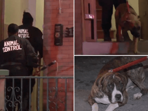 Starving dogs ate their owner after he died 'of natural causes'